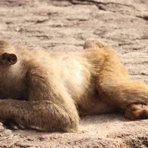 二か月ぶりに行った安佐動物公園