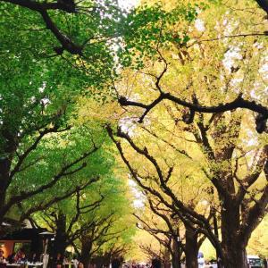 今日から開催!「神宮外苑いちょう祭り」気になる混雑状況
