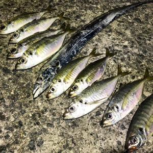淡路島でアジ釣りからの、タチウオ釣りからの、アジ釣り。久しぶりに釣れたよね〜😁