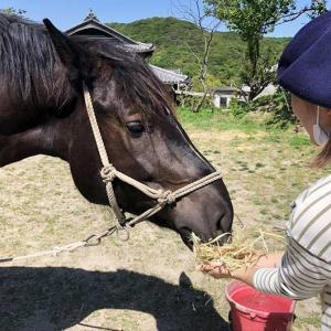 【ASMR】淡路島の人気馬・風月とアネロワのランチに潜入❗️鼻先15cmで録った咀嚼音で癒されて〜😆