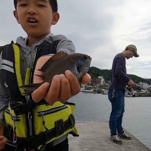 淡路島で子供とサビキが楽しい❗️本命のアジは釣れずも、なめろうを食べれた幸運🤩