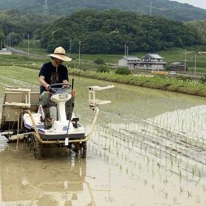淡路島・鮎原米づくり2020 #02|田植え作業で、頑張る息子が頼もしい❗️ご褒美は・・😂