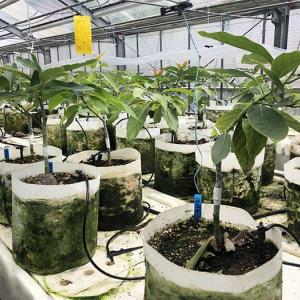 淡路島でアボカド栽培を❗️和歌山県・橋爪農園さんで勉強してきました〜😁