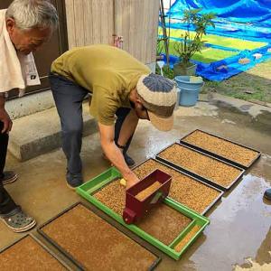 淡路島・鮎原米づくり2021 #01|移住して4回目のお米づくりスタート❗️籾まきしてきました〜😁