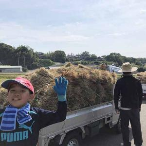 淡路島・小麦づくり2021 #04|梅雨の合間、無事に収穫できました❗️結構、大量っす〜😁