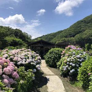 淡路島・あわじ花山水2021❗️今週から紫陽花(アジサイ)が見頃を迎えるそうですよ〜😊