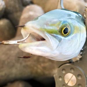 淡路島・洲本でトップゲーム。サイレントソルトスキマーで嬉しい初釣果😁