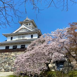 気晴らしにお花見へ♡豊公園(長浜城)