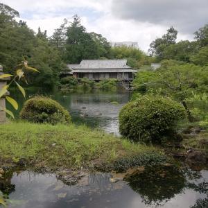59年ぶり満水に(三島の楽寿園・小浜池)