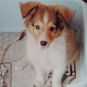 「犬と私の交換日記」書いてます*