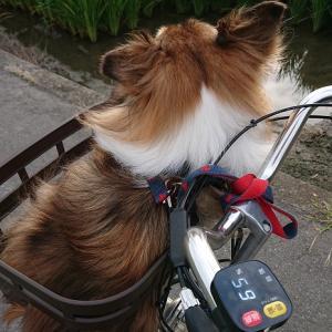 自転車さんぽ