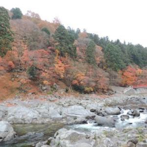愛知で紅葉の名所といえば、やっぱり香嵐渓でしょうね