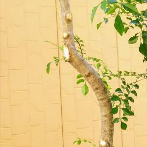 ◇やっと断捨離…過去に反対した買い物はイケアの木製チェア