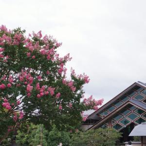 京都水族館①       クラゲワンダー