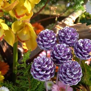 気持ちをのせて      北野天満宮  カラフルな花手水と寒紅梅