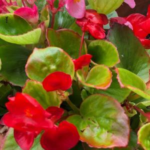 幸せを運んできてくれた花