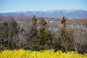 早春花リレー 菜の花とロウバイ
