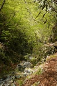 山行 5月ダイジェストその1 雨山峠、ユーシンロッジ