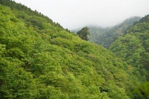 山行 5月ダイジェストその4 丹沢山中プロペラ探し