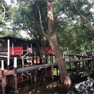 【ボリビア】アマゾン1愛くるしいのは!?大量の蚊とワニのいる宿 ーアマゾンツアー1日目ー