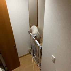 階段降りるとお出迎え、8ヶ月になったけど、小さいのかなぁ