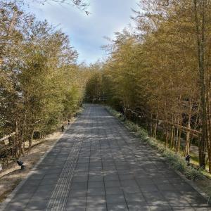 【福岡】一蘭の森がラーメンの聖地と言われる意味がわかった【糸島】