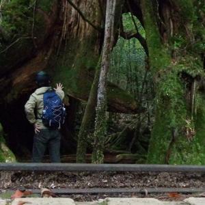 山道を歩こう ~縄文杉を目指して屋久島の原生林を一人で歩く~