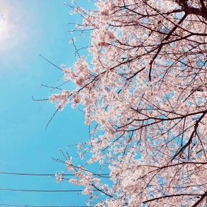桜色の太陽とすまいる