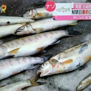 須雲川でアユ、ヤマメ大量死