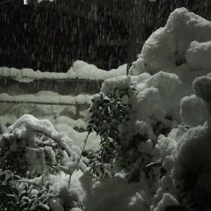 極寒の冬でも屋外で管理できるサボテンはあるか