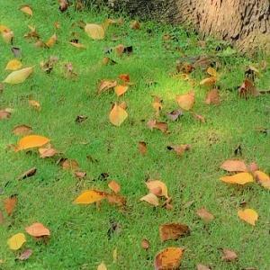 ▪秋を感じることは何でしょうか?