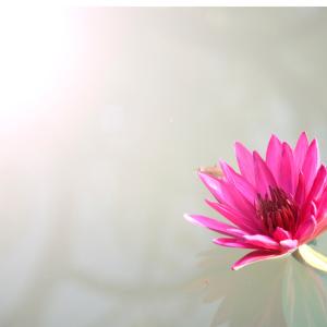 花を飾ることがストレスになるとき