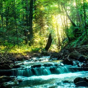 在宅勤務中もOK。森の中で仕事気分。癒しの音楽を流してハッピーになる。