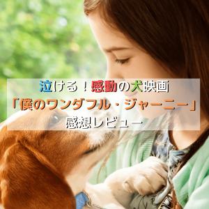 泣ける!感動の犬映画「僕のワンダフル・ジャーニー」感想レビュー
