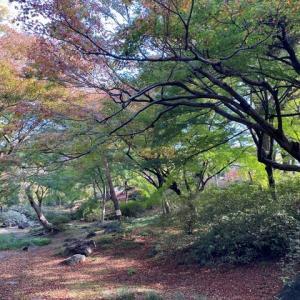 東京のオアシス 光がフレッシュでした 六義園 豊島区