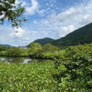 梅雨の合間の晴れた日 湿生花園 仙石原 箱根