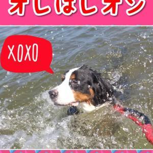 超大型犬 琵琶湖 オフ会 その2(^_-)-☆