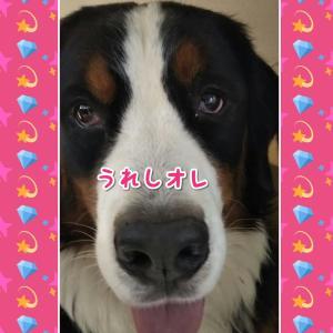 """犬に噛まれると 高くつく """"(-""""""""-)"""""""