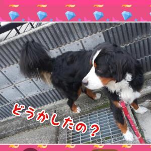 親バカ? レオン偉い? (^_-)-☆