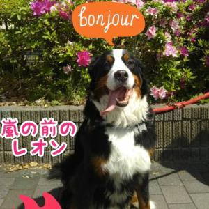 💖大型犬の魔力💘