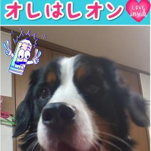 ⭐我が家の犬種の人気度について🐶💖