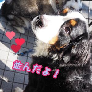 🐶大型犬のファン様だよ💟💝✋