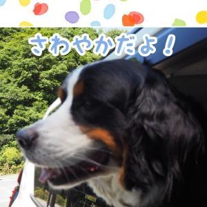 犬鳴山温泉紀行① 🥰 ✋