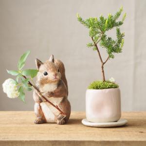 リスさんとミニ盆栽