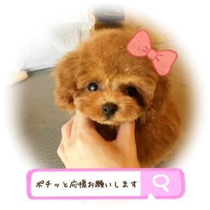 ぷーすけ君(*´▽`*)