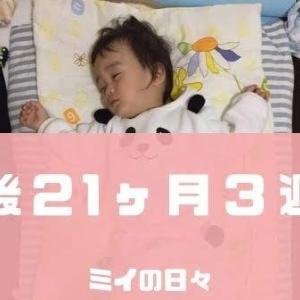 定期身体測定1歳9ヶ月(生後21ヶ月3週目)