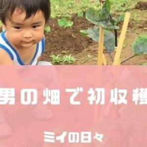 2歳児自分で育てたナスを初収穫