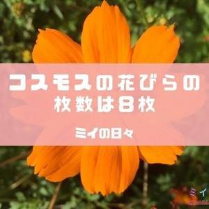 コスモスの花びらの枚数は8枚