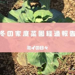 冬の家庭菜園の経過報告