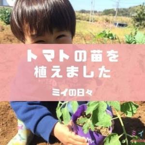 子どものための家庭菜園「トマト」を植えてみたけど、4月に植えるのは早すぎた・・・?